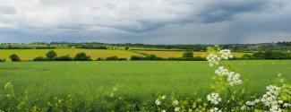 Séjour linguistique en Angleterre pour un professionnel Essex