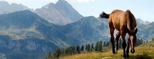 Année d'étude à l'étranger en Autriche pour lycéen
