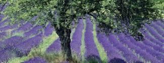 Immersion chez le professeur en France Provence